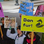 Midwest March for Animals Chicago Illinois 10-14-18 4631 thumbnail