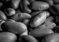 Beans... (+Pattycake+) Tags: mirrorless bokeh bw macro beans macromondays food bfood light shade monochrome composition shallowdof dof lumixgm1 panasonic 1445mm cannellini pulses legumes spillthebeans