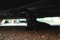 neko-neko2248 (kuro-gin) Tags: cat cats animal japan snap street straycat 猫 sigma dp2