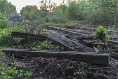 Remains (d0mokun) Tags: blackcountry railway southstaffsline abandoned autumn sleepers sunset urbandecay urbanexploration urbanlandscape urbex westmidlands tipton england unitedkingdom gb
