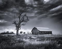 Monochrome photo of an old barn near Last Chance, CO taken in the summer. (wximagery) Tags: monochrome oldbarn summer blackandwhite meadow field dramatic spooky