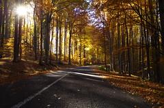 Road to autumn (Baubec Izzet) Tags: baubecizzet pentax nature autumn trees leaves road flickrunitedaward