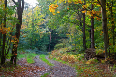 Woodland Walks (kent) (Adam Swaine) Tags: woodland woodlandfloor trees autumn autumncolours autumnkent walks england english rural ruralkent beautiful seasons canon leaves kent kentweald counties countryside county naturelovers nature uk ukcounties sunlight glade britain british