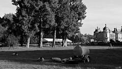 Une vie de château (Un jour en France) Tags: monochrome château mouton blancetnoir noiretblancfrance blancetnoirfrance canonef1635mmf28liiusm canoneos6dmarkii