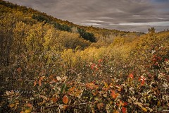 Otoño, lleno de color.  ( autumn, full of color ) (<María>) Tags: arboles monte bosque montaña hojas zarzas cielo nubes naturaleza natura otoño coloresdeotoño autumn