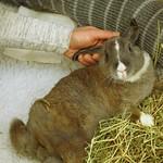 Jingles (paraplegic bunny) thumbnail
