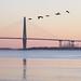 crossing the river (Jim_ATL) Tags: pelican bird flight silhouette bridge sunrise charleston south carolina landscape explored