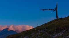 lonesome! (hanspeterneuburger) Tags: dämmerung felsen gras berge abendrot himmel wolken baum mond