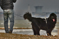 8 (marcomarchetto956) Tags: dog friendship explore