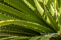 TECP2699.jpg (Terry Christian Photo) Tags: tornillo tx texas