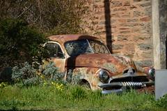 DSC_9036 rusted FJ Holden, Church Road, Tungkillo, South Australia (johnjennings995) Tags: tungkillo rusted rusty abandoned car automobile fjholden southaustralia australia generalmotors gmh