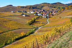 Niedermorschwihr (Haut-Rhin, F) (pietro68bleu) Tags: alsace automne couleursorangées village vignoble clochertors