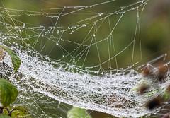 _DSC3463_DxO (malcolmpymm) Tags: ranmore mist spider web water droplet