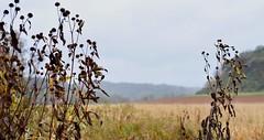 #pocket_world #ig_landscape  #dream_spots #visual_heaven #landscapephoto #landscape_lover #natgeoadventure #earthexperience #mthrworld #majestic_earth  ?  #igworldglobal #ilovenature #ig_divineshots #EarthOfficial  #earth_shotz #marvelshots #theworldshotz (poison310) Tags: naturewizards marvelshots landscapelover earthfocus igdivineshots beautyofnature ilovenature earthportraits placeswow fiftyshadesofnature roamtheplanet fantasticearth landscapehunter colorsofday earthshotz stunningshots keepitwild nakedplanet theworldshotz naturebrilliance mthrworld iglandscape landscapephoto natgeoyourshot pocketworld visualambassadors discoverglobe theglobewanderer adventurethatislife majesticearth naturesultans mastershots visualheaven igbestshotz natgeoadventure awesomeglobe ourplanetdaily awesomeearthpix epiccaptures igcountryside natureperfection igersmood earthexperience igworldglobal stayandwander earthofficial splendidearth dreamspots natgeotravelpic