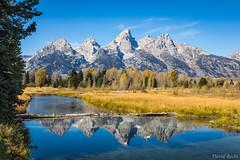 I Can't Resist (David Recht) Tags: grandteton moose wyoming unitedstates us schwabacherlanding snake river reflection mountains jagged peak