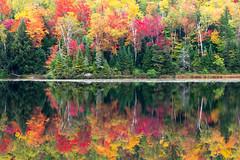 Fall color, Newport Pond. (martincutrone) Tags: foliage fall adirondack newportpond