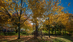 Take a seat. (scrimmy) Tags: scotland dundee autumn trees sky bench