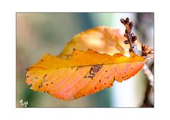 autum (Fujigraf) Tags: blatt natur autum herbst farben color baum wald wiese strauch ast schön weich bokeh fuji xt20 pentacon 50mm