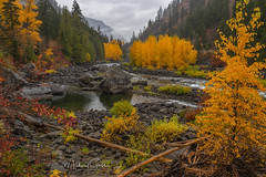 Rainy Autumn Day (NikonDigifan) Tags: wenatcheeriver leavenworthwashington autumncolors autumn fallcolors fall trees water clouds storm autumnfoliage foliage pnw pacificnorthwest washington nikond750 nikon nikon28300 mikegassphotography nature landscape scenic