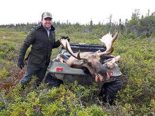 Newfoundland Caribou Hunt, Moose, Bear Hunting  11