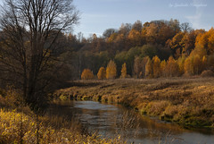Colors of autumn (Lyutik966) Tags: nature autumn river istra tree grass water russia newjerusalem landscape