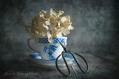 Teacup Delight (Janet_Broughton) Tags: burnside35 lensbaby teacup vintagechina textured stilllife