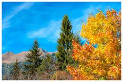 Automne dans les Alpes suisses (Pascale_seg) Tags: landscape paysage mountain automne autumn autunno alpes suisse svizzera tree sapin sky