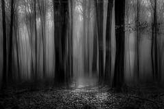 Las (mariuszpawel) Tags: blackandwhite abstract atmosphere mist fog motion