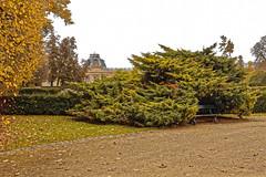 L'abri des solitudes (Jean-Marie Lison) Tags: eos80d sigmaart tervuren parc banc muséeroyaldelafriquecentrale pelouse haie
