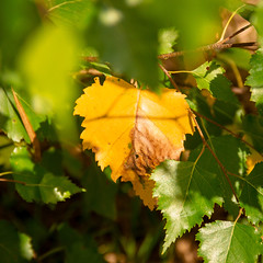 Leaf (MAKER Photography) Tags: leaf green yellow brown blurry depth field nature grass tree hole autumn canon eos 7d germany outside bokeh