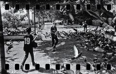 Lomography (Samy Collazo) Tags: lomography lomo holga holgas 35mmadapter sprockets aristaedu10035mm parquedelaspalomas sanjuan oldsanjuan viejosanjuan puertorico palomas pigeons bn bw streetphotography fotografiacallejera toycameras camarasdejuguete camarasdeplastico plasticcameras