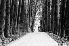 Demarrage (*Chris van Dolleweerd*) Tags: cycling sport wielrennen bicycle chrisvandolleweerd street streetphotography