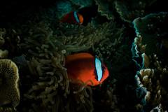 IMG_7071 (Gil Xavier) Tags: underwater scuba philippines canon fantasea g7xmk2 cebu moalbal turtlebay