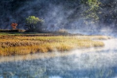 Golden Mist (ROPhoto77) Tags: outdoors nature landscape misty mist oyster creek winter sunshine