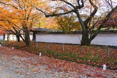 Good Old Days (arbivi) Tags: autumn fall foliage koyo momiji japanese maple tree red orange kyoto japan canon 60d tamron arbivi raymondviloria