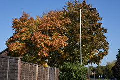 DSC_1891 (PeaTJay) Tags: nikond750 reading lowerearley berkshire gardens outdoors nature flora fauna plants flowers trees shrubs bushes foliage