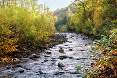 Red Creek (Singing Like Cicadas) Tags: 2018 autumn appalachia outdoors waterscape redcreek nature landscape randolphcounty trees water onethousandgifts 1000gifts morning