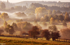 10102018-DSC_0171 (vidjanma) Tags: matin automne brume ardenne arbres