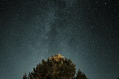 Autumn Stars (StirlingCreative.com) Tags: stars nighhtsky autum night starscape tree maine astronomy astrophotography universe solarsystem galaxy milkyway heavens