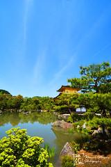 The Golden Temple (Hannah Murphy Photography) Tags: japan japanese kinkaku kinkakuji gold golden temple flora trees water lake