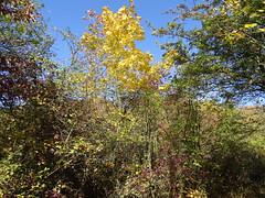 Herbstfarben (Thomas230660) Tags: sonne herbst flora sony arnstadt wanderung landschaft landscape bäume thüringen trees blätter