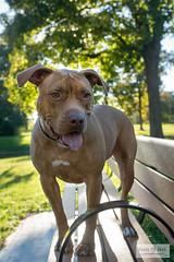 Butter (Becky Swora) Tags: beckyswora dog pet petphotography lima ohio outdoor natural light animal portrait