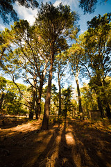 Strolling (Stray Toaster) Tags: brownsea island trees 14mm