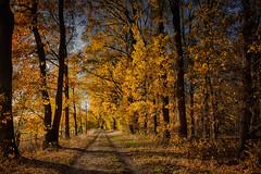 Herbstallee (radonracer) Tags: autumn herbst