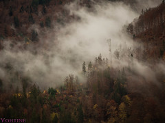 The Black Forest is not just black (Yohtine) Tags: schwarzwald black forest foret noir baum nature natur herbst autoumn fall dark blackforest foretnoir badenwürttemberg