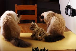 Vorbereitungen für ein Katzenportrait