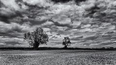 It will be rain before evening (David Feuerhelm) Tags: nikkor monochrome bw blackandwhite noiretblanc schwarzundweiss negroyblanco contrast wideangle clouds infrared silverefex ir hedge trees suffolk england farming agiculture nikon d90 1020mmf4056