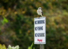 No This, No That... (JMS2) Tags: sign bird perched park nature outdoor bokeh