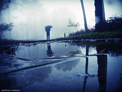 The rain is here :) (Guillermo Carballa) Tags: people man rain fog mist puddles water forest woods trees pines carballa blue light morning umbrella