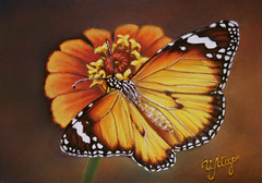 Danaus plexippus /  Monarch Butterfly (irishishka) Tags: art pastelpainting pastel drypastel artirishishka danausplexippus monarchbutterfly butterfly drawing insects